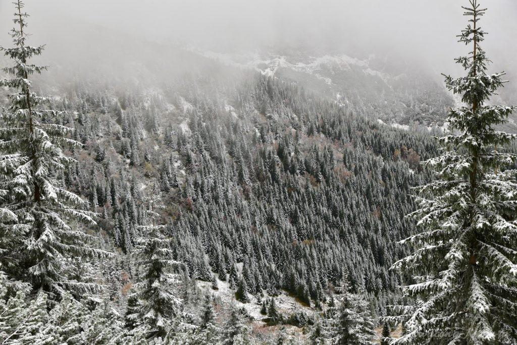 W poszukiwaniu jesieni, (a może zimy) w Tatrach Bielskich - tym razem dotarliśmy do Szerokiej Przełęczy (17)