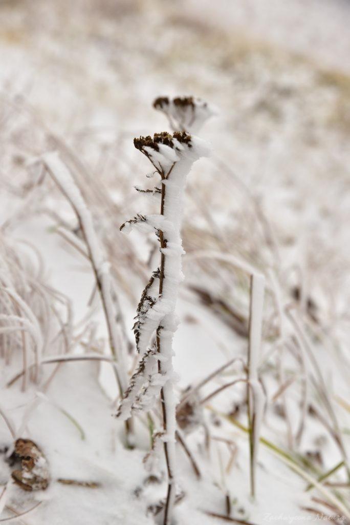 W poszukiwaniu jesieni, (a może zimy) w Tatrach Bielskich - tym razem dotarliśmy do Szerokiej Przełęczy (21)