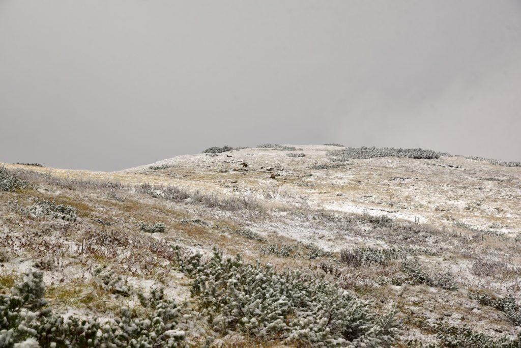 W poszukiwaniu jesieni, (a może zimy) w Tatrach Bielskich - tym razem dotarliśmy do Szerokiej Przełęczy (39)