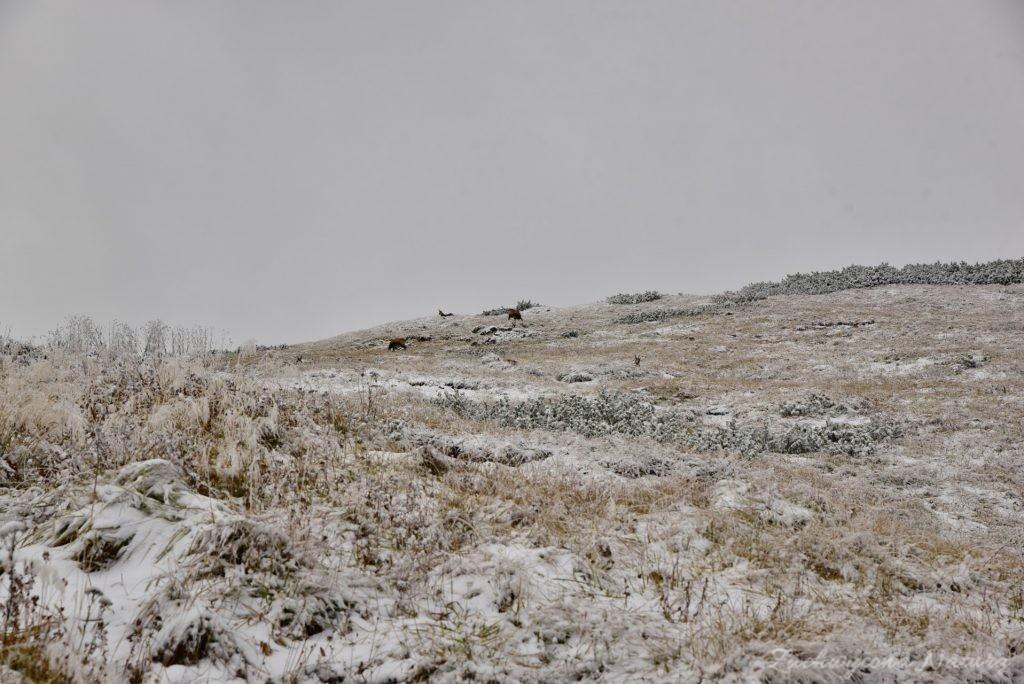 W poszukiwaniu jesieni, (a może zimy) w Tatrach Bielskich - tym razem dotarliśmy do Szerokiej Przełęczy (41)