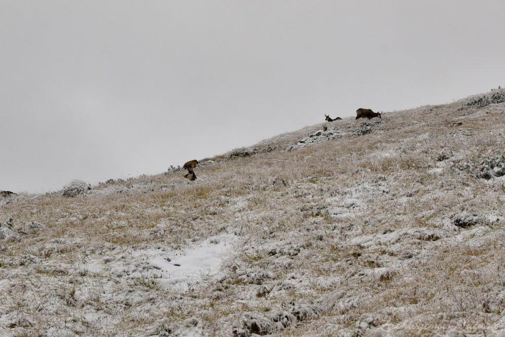 W poszukiwaniu jesieni, (a może zimy) w Tatrach Bielskich - tym razem dotarliśmy do Szerokiej Przełęczy (42)