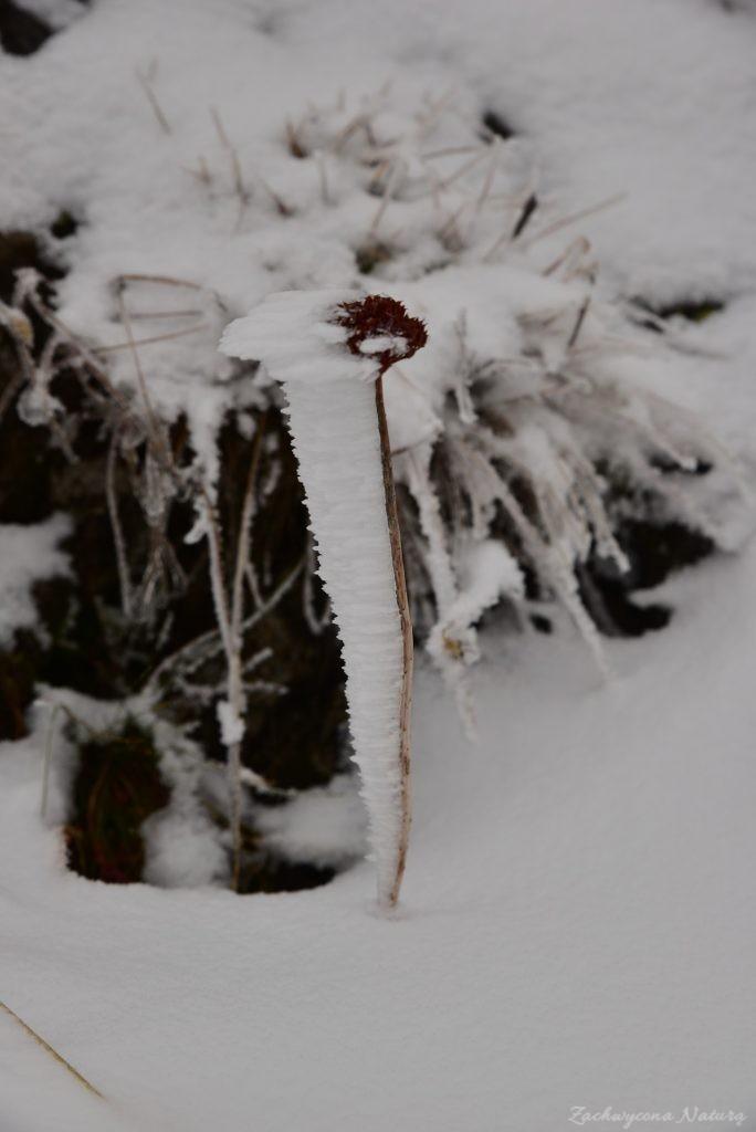 W poszukiwaniu jesieni, (a może zimy) w Tatrach Bielskich - tym razem dotarliśmy do Szerokiej Przełęczy (48)