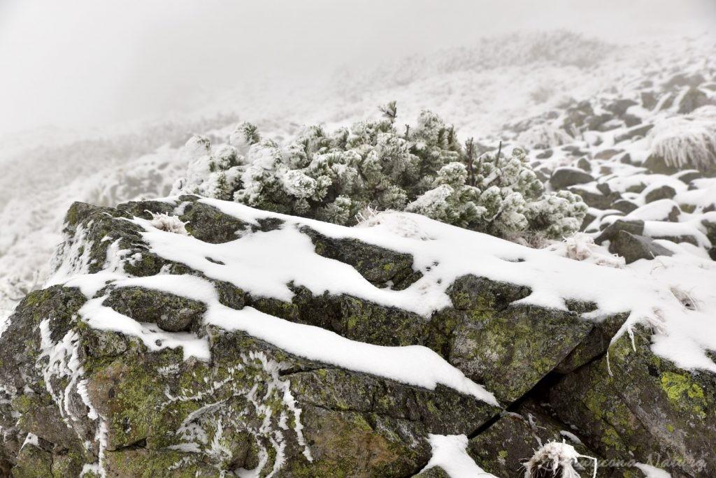 W poszukiwaniu jesieni, (a może zimy) w Tatrach Bielskich - tym razem dotarliśmy do Szerokiej Przełęczy (49)