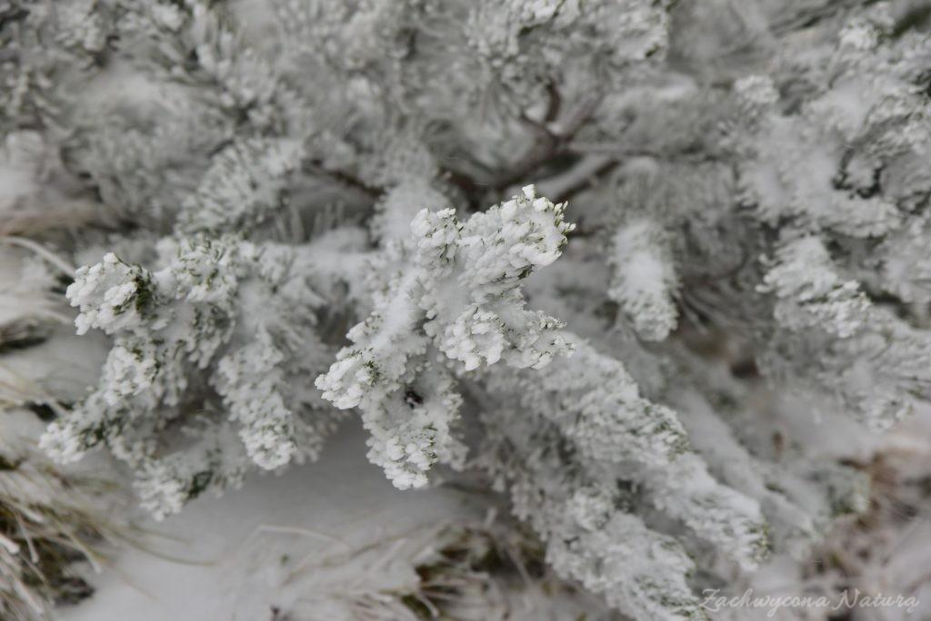 W poszukiwaniu jesieni, (a może zimy) w Tatrach Bielskich - tym razem dotarliśmy do Szerokiej Przełęczy (54)