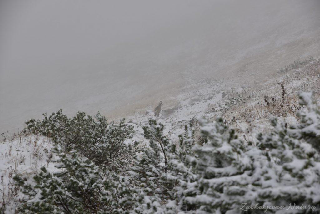 W poszukiwaniu jesieni, (a może zimy) w Tatrach Bielskich - tym razem dotarliśmy do Szerokiej Przełęczy (55)