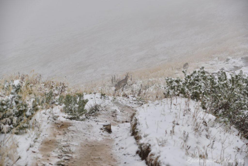 W poszukiwaniu jesieni, (a może zimy) w Tatrach Bielskich - tym razem dotarliśmy do Szerokiej Przełęczy (56)