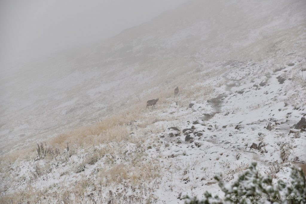 W poszukiwaniu jesieni, (a może zimy) w Tatrach Bielskich - tym razem dotarliśmy do Szerokiej Przełęczy (57)
