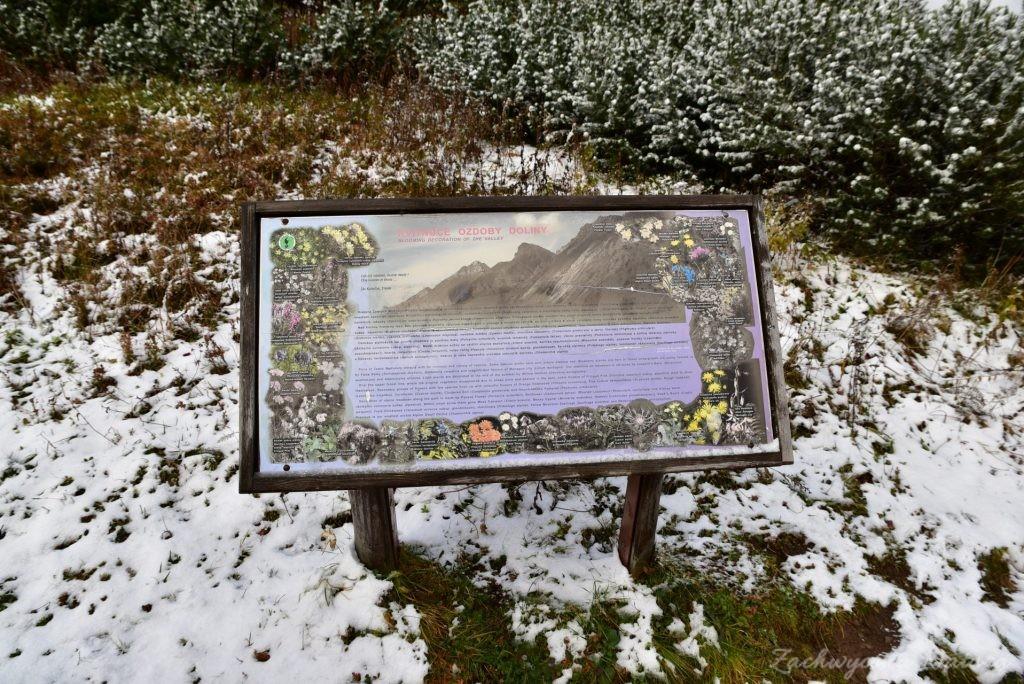 W poszukiwaniu jesieni, (a może zimy) w Tatrach Bielskich - tym razem dotarliśmy do Szerokiej Przełęczy (62)