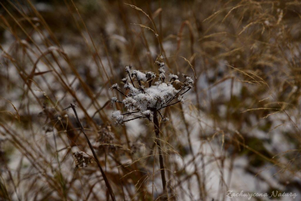 W poszukiwaniu jesieni, (a może zimy) w Tatrach Bielskich - tym razem dotarliśmy do Szerokiej Przełęczy (64)