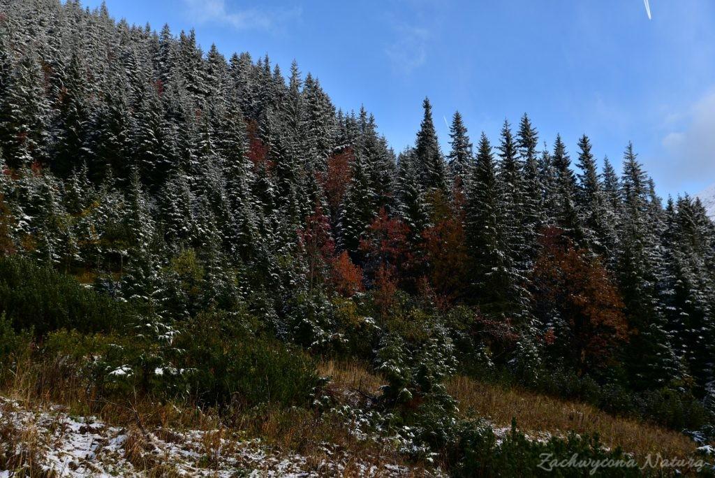 W poszukiwaniu jesieni, (a może zimy) w Tatrach Bielskich - tym razem dotarliśmy do Szerokiej Przełęczy (69)