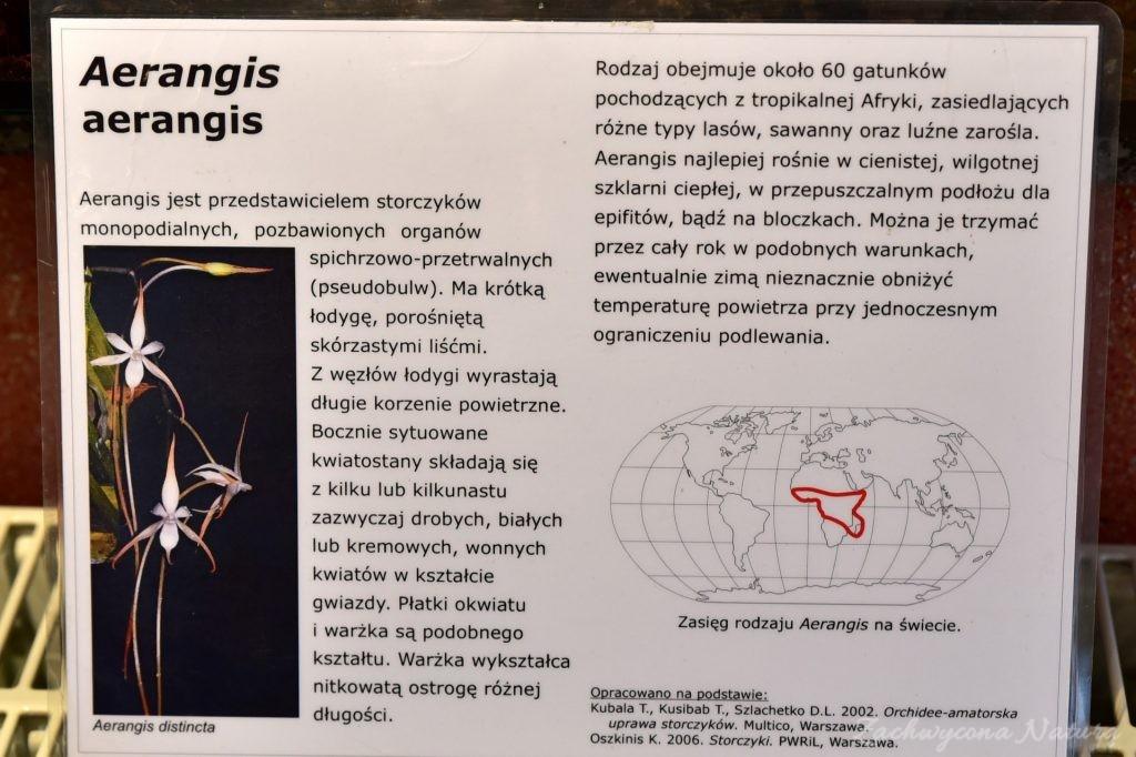 Wystawa storczyków w Łódzkiej Palmiarnii 2017 (72)
